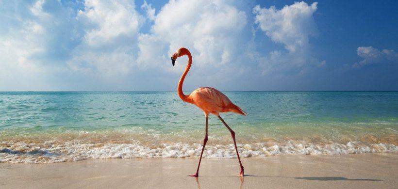 Zbor FOARTE ieftin catre Caraibe, Aruba 387 Euro