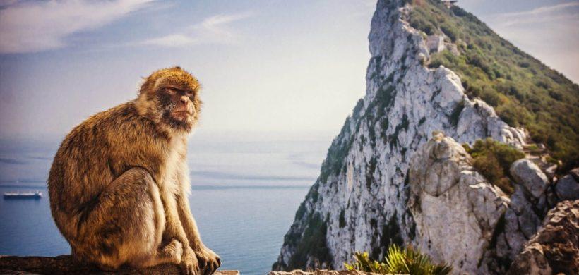 Vacanta in Malaga si Gibraltar! 171 eur/pers (zbor, cazare 4 nopti si transfer)