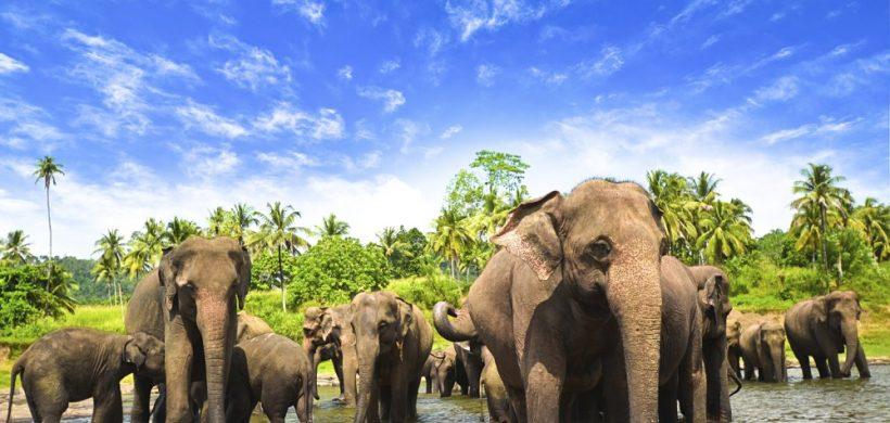 Zboruri ieftine catre Sri Lanka, inclusiv de Craciun si Revelion! 440 Eur dus-intors din Bucuresti