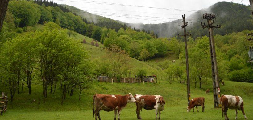 10 locuri pe care nu trebuie să le ratezi în Țara Hațegului, Hunedoara și Deva