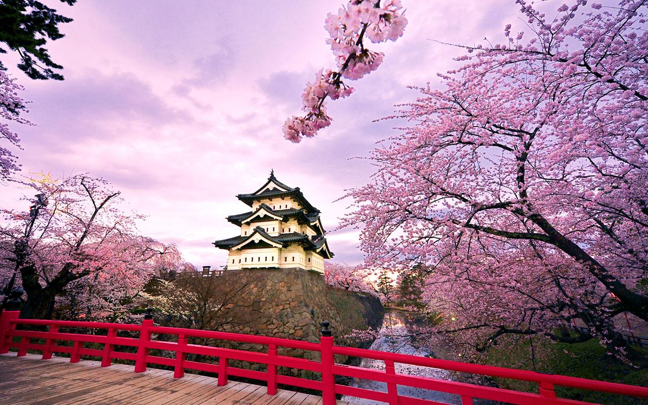 PROMOTIE All Nippon Airways! Zboruri ieftine catre Japonia, de la 455 euro dus-intors!