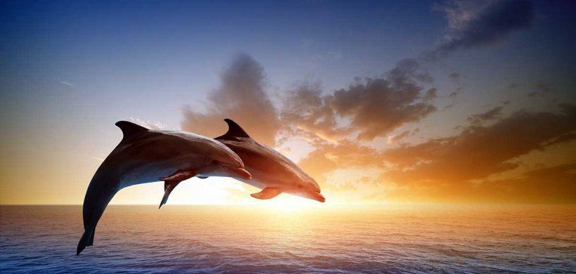 Cu discernământul în vacanță. De ce să nu înotăm cu delfinii