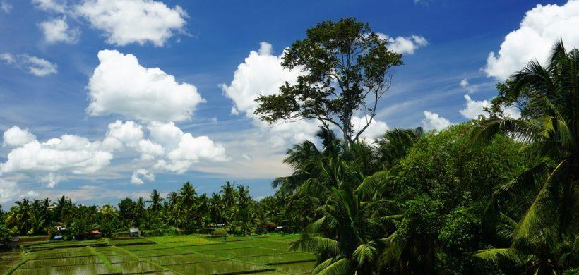 Campuhan Ridge Walk, drumul teraselor de orez din Bali