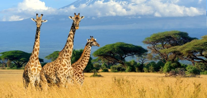 Zboruri din Berlin si Munchen catre Kenya, de la 366 euro dus-intos!